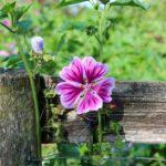Permahaven låge og blomst